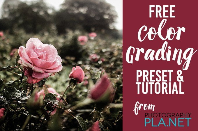 Free Color Grading Lightroom Presets  Flourish  Free Resources